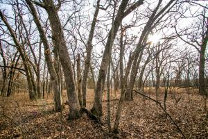 Secluded Build Site & Acreage in Eudora  in Douglas, KS (36 of 54)