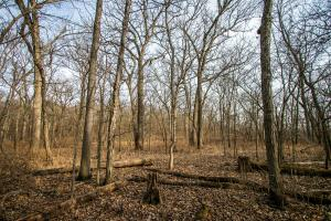 Secluded Build Site & Acreage in Eudora  in Douglas, KS (48 of 54)
