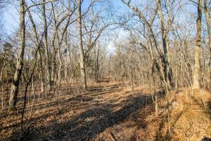Secluded Build Site & Acreage in Eudora  in Douglas, KS (20 of 54)