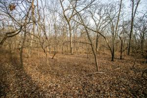 Secluded Build Site & Acreage in Eudora  in Douglas, KS (50 of 54)