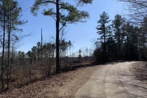 Large Investment & Hunting Tract - Grenada County MS