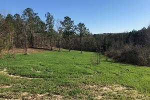 Carroll Creek Homesite and Recreational Property - Tuscaloosa County, AL