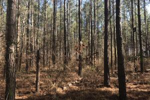 Columbus Hunting & Timber Treasure - Lowndes County MS