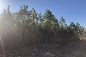 Splitdrive Hunting Spot - Brunswick County, NC