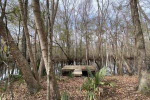 Combahee River Ponds - Colleton County, SC