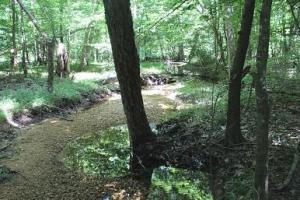 Riverton Rose Trail - Hog Hollow West - Colbert County, AL