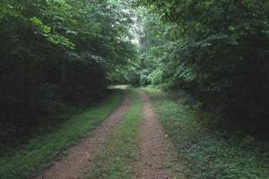 Riverton Rose Trail - Hog Hollow East - Colbert County, AL