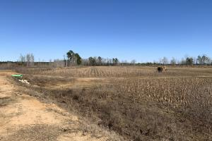 Drained Impoundment (64 of 65)