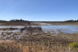Impoundment: Low Water, partially drained (51 of 65)