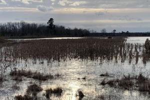 Flooded Impoundment (45 of 65)
