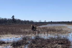Impoundment Blind: Low Water, Partially drained (53 of 65)