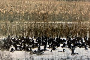 Ducks In The Impoundment (26 of 65)