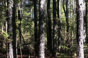Lick Creek Timber Tract - Calhoun County MS