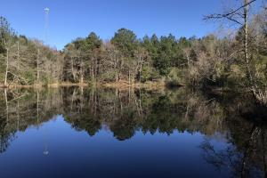 Springhill Road Timber and Hunting Property  - Pearl River County MS