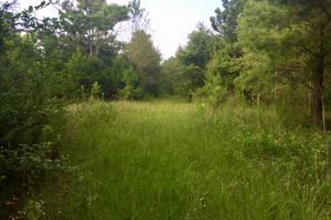 Muckalee 223 Acre Recreation Tract - Marion County GA