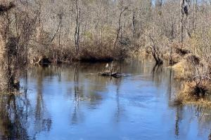 Swift Creek Vidalia Hunting and Recreational Tract