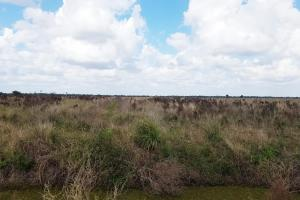 +/-650 Irrigated Acres; Farm Improvements In-Progress - Charlotte County, FL