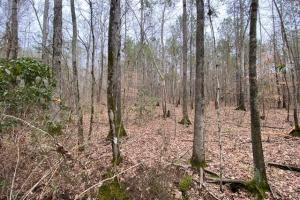 Clanton Hunting & Timber Tract - Chilton County, AL