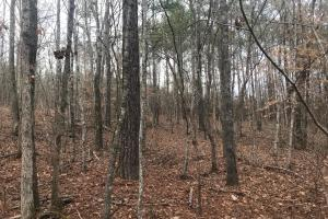 Baker Creek Recreation and Timber Tract - Fayette County, AL