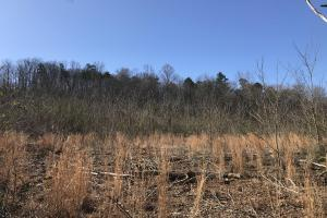 20+- Acre Residential Development Property off Ball Camp Pike - Knox County, TN