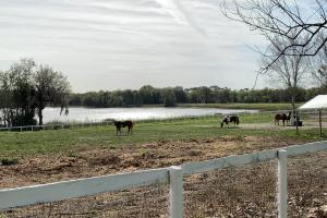 Horse Pen by Lake (57 of 68)
