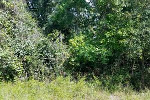 1.2 acre Residential Lot Near the Withlacoochee River