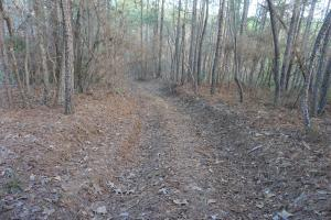 Marion Timber and Hunting Tract - Perry County, AL