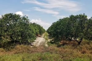 380 acre Citrus Grove on Mineral Branch Road - Hardee County, FL