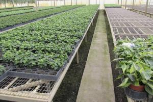 54± Ac Greenhouse /Nursery - Lake County, FL