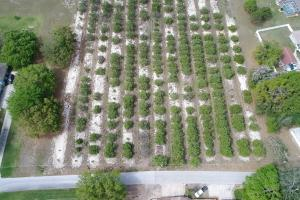 13± Acre Grove with Potential Residential Development Use - Polk County, FL