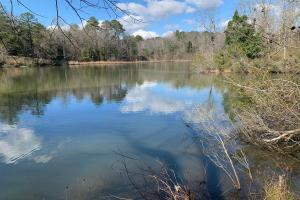 Secluded Recreational and Investment Timberland Fronting Beautiful Pond