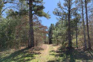 Timber, Trails, and Hunter Campsite - Red River County, TX