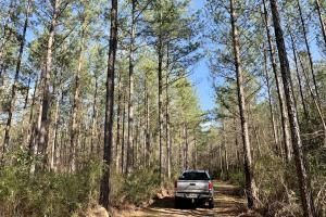 Pine Branch Timber and Hunting Investment  - Washington County, AL