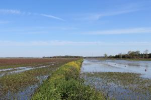 Excellent 402 Acre Crawfish and Rice Farm Investment - Jefferson Davis Parish, LA
