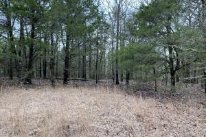 80+/- Acre Timberland on Ridge Drive - Faulkner County, AR