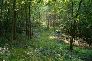 Homesite with Great Hunting - Trimble County, KY
