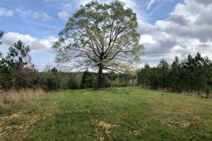 Tibbie Hunting and Timber Investment Tract