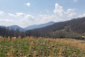 Whitetail Lane Tract - Avery County, NC