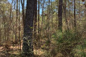 Excellent 21 acre Timber Investment with Deer and Turkey - Catahoula Parish, LA