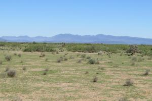 Bowie large Ranch, Recreational,Orchard Property - Cochise County, AZ