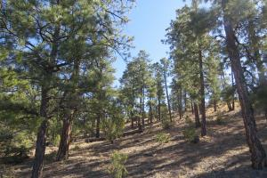 Bluewater Lake large ranch property - Cibola County, NM