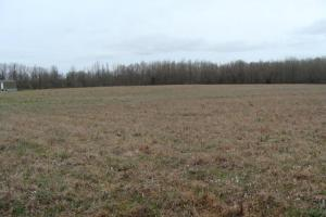 Timber & Pasture Land - White County, AR