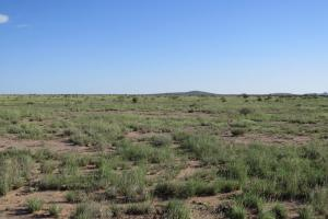 Hachita Large Farm, Orchard, Ranch Property - Grant County, NM