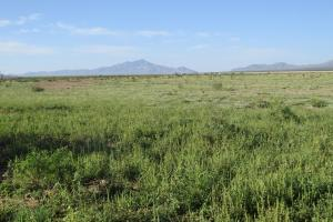Hachita Large Ranch, Orchard, Farm Property - Grant County, NM