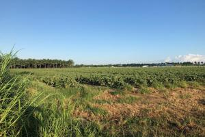 5 Acre Land on SW 169 Ave