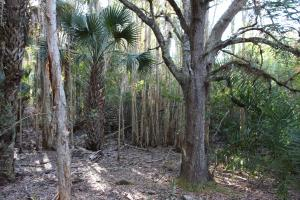 Pines, oaks, and cabbage palms (17 of 19)
