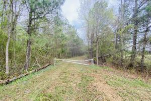 Lewiston Hunting Tract - Bertie County, NC