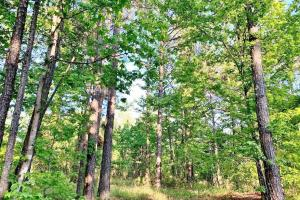 Hunting & Investment Property in Prime Location - Attala County, MS