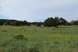 Quemado Omega Pines 150 acres Ranch - Catron County, NM