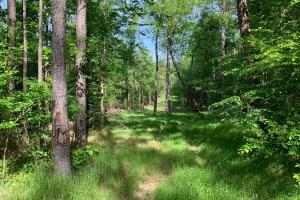 Affordable Hunting Land With Scattered Hardwood on Sipsey Creek